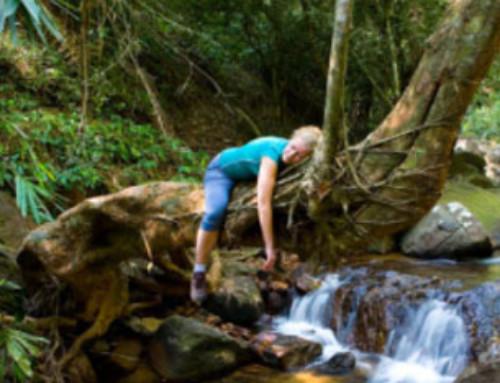 Guía práctica para combatir la astenia primaveral